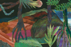 janie andrews mangroves